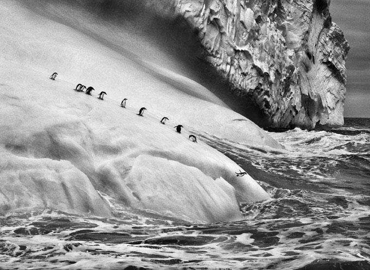 "The photographic exhibition ""Sebastião Salgado. Genesis"" at the Mole Vanvitelliana"